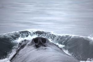 Black Pearl surfacing