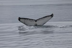 humpback whale: Inukshuk