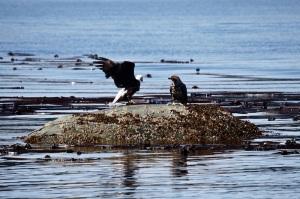 300713-eagles