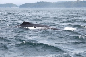 close encounter with humpback whale