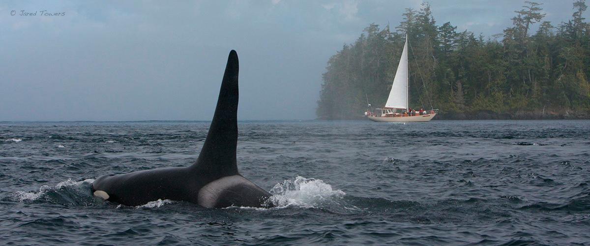 whale_tuan_jared